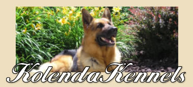 Kolenda Kennels - German Sherpherd Breeders